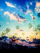 船橋デリヘル風俗|船橋 西船橋 デリバリーヘルス【キャンパスサミット船橋店】にな【こんばんわ♪♪*】日記画像